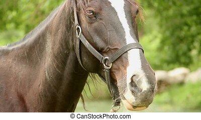 horse muzzle - friendly horse muzzle