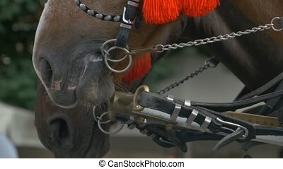 Horse Muzzle - Close-up shot of the muzzle of a horse.