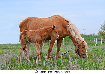 Horse nature animal favorite