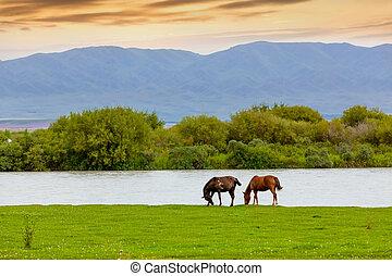 Horse near the lake
