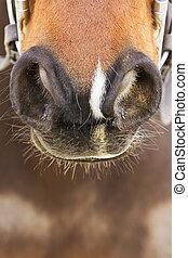 Horse Nostrils