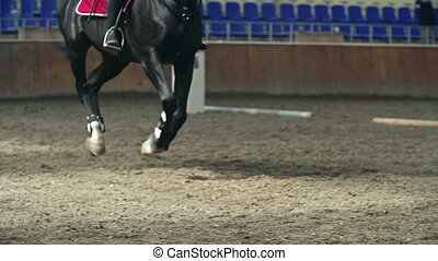 Horse Obstacle Race - Low section of a horse jumping the...