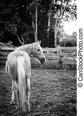 Horse of a farm
