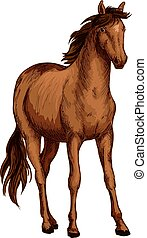 Horse of arabian breed sketch with brown mare