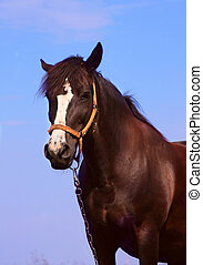 Horse on a background of blue sky