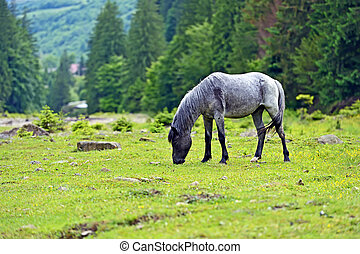 Horse on a background of mountain