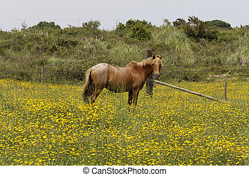Horse on a flower meadow in Corsica