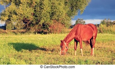 Horse on a green field