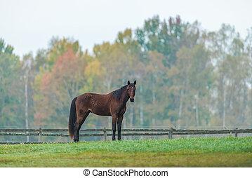 Horse on a green grass field during autumn, Sweden