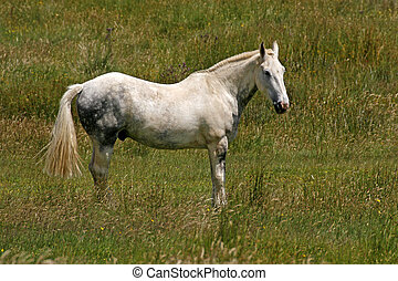 Horse on a meadow in Cornwall