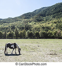 Horse on a Meadow in France