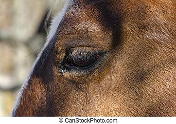horse on a meadow in Praglia plateau in Liguria