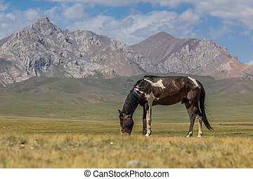 Horse on a meadow in the mountains of Kyrgyzst