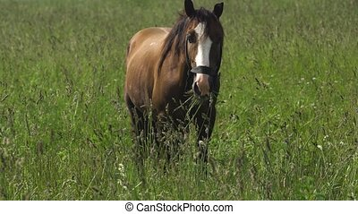 Horse on a summer pasture. - Horses graze in the meadow....