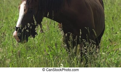 Horse on a summer pasture.