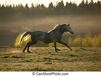 horse on fog meadow in morning