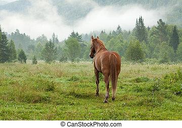 horse on fog meadow