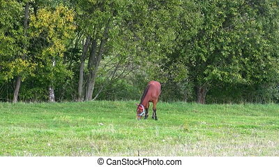horse on green meadow