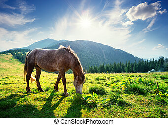 Horse on mountain pasture in the rays of bright sun