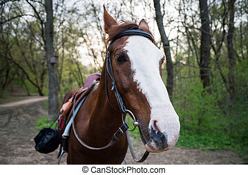 Horse on nature. Portrait of a horse