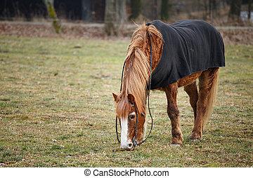Horse on pasture in autumn