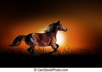 Horse on the background of sunset