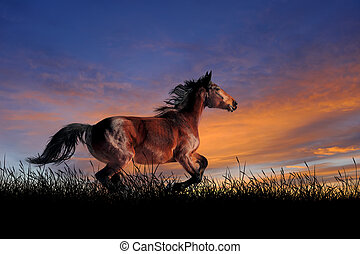 Horse on the background of sunset sky