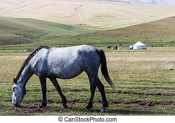 horse on the background of the yurt