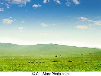 Horse on the grassland