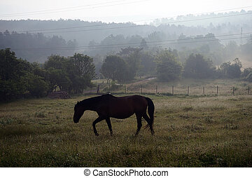 Horse on the meadow in fog