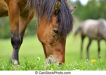 Horse on the pasture