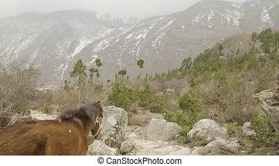 Horse on the path among the mountains in Nepal. Manaslu circuit trek area.
