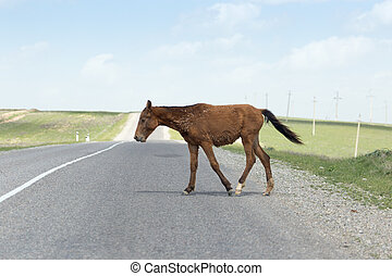 horse on the road