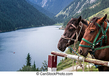 horse on the shore of a mountain la