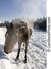 Horse on the winter range.