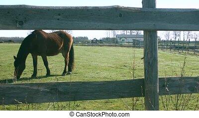 Horse pasture slow motion 4K