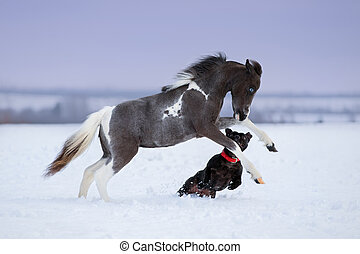 horse playing with a dog in winter