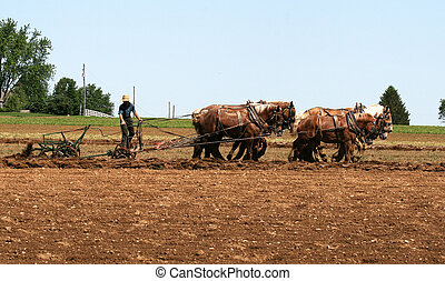 Horse Ploughing - An Amish farmer uases traditional horse...