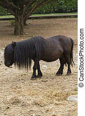 horse pony  in the farm
