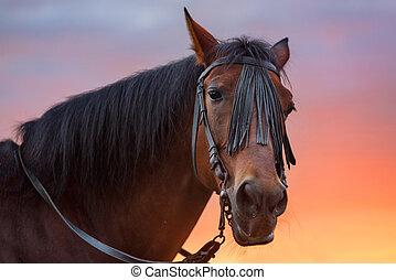 Horse portrait at sunset