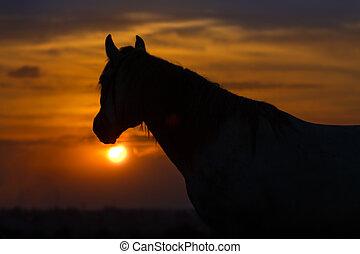 Horse portrait dawn