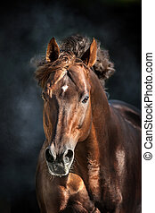 Horse portrait isolated