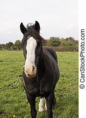 Horse portrait on a meadow, Germany