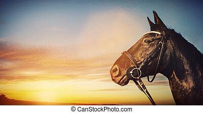 Horse portrait on sunset sky. Banner background