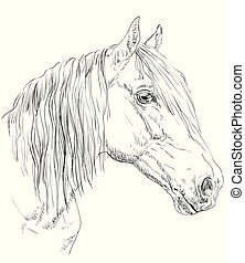 Horse portrait - Orlov Trotter horse portrait. Horse head in...