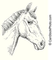 Horse portrait - Trakehner horse portrait. Horse head in ...