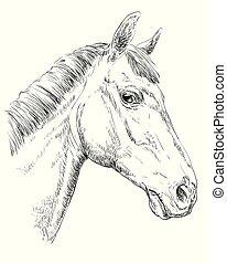 Horse portrait - Trakehner horse portrait. Horse head in ...