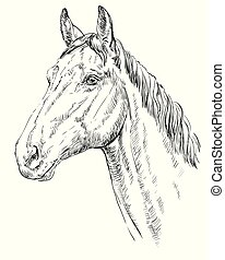Horse portrait - Trakehner portrait. Horse head in profile ...