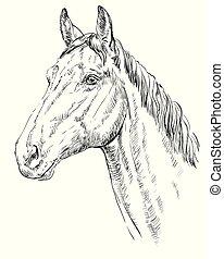 Horse portrait - Trakehner portrait. Horse head in profile ...