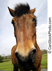 Wide angle portrait of a horse